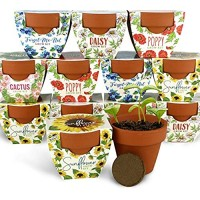 BUZZY Terracotta Mini Grow Pots | Assorted 6-Pack | Daydream Collection | Sunflower  Daisy  Poppy  Cactus  Forget-Me-Not | Best Gardening Gifts and Favors | Growth Guaranteed