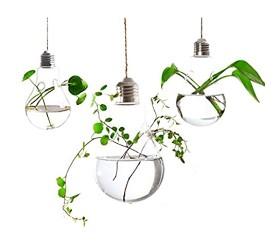 Ivolador 3PCS Lightbulb Glass Hanging Planter Vase Terrarium Container for Hydroponic Plants Home Garden Decor - Double Hole