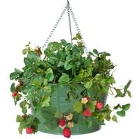 HIT Corp. 8495E SA Floral Hanging Metal Strawberry herb Flower Planter Sage